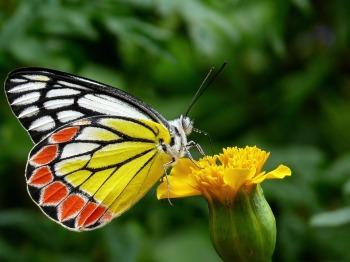 butterfly-85628_960_720